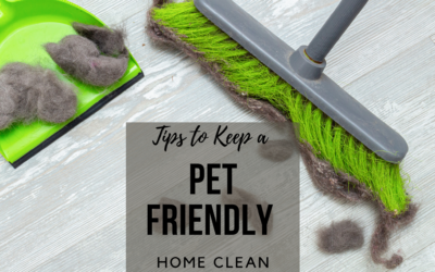 Tips to Keep a Pet Friendly Home Clean