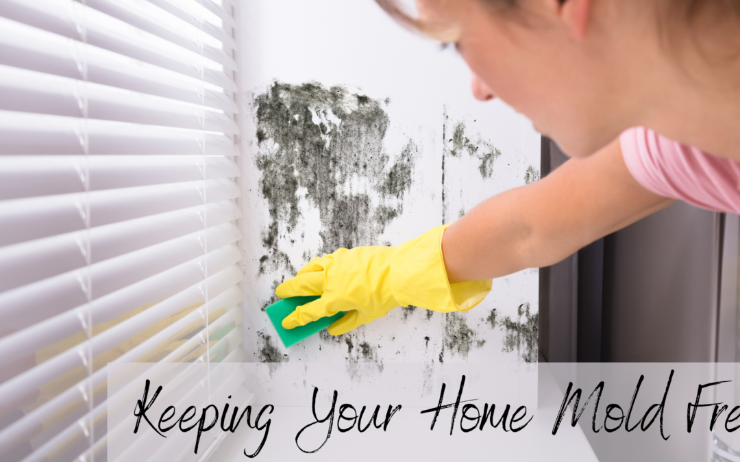 5 Easy Ways to Keep Your Home Mold Free